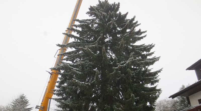 der gr te weihnachtsbaum nordrhein westfalens auf der. Black Bedroom Furniture Sets. Home Design Ideas