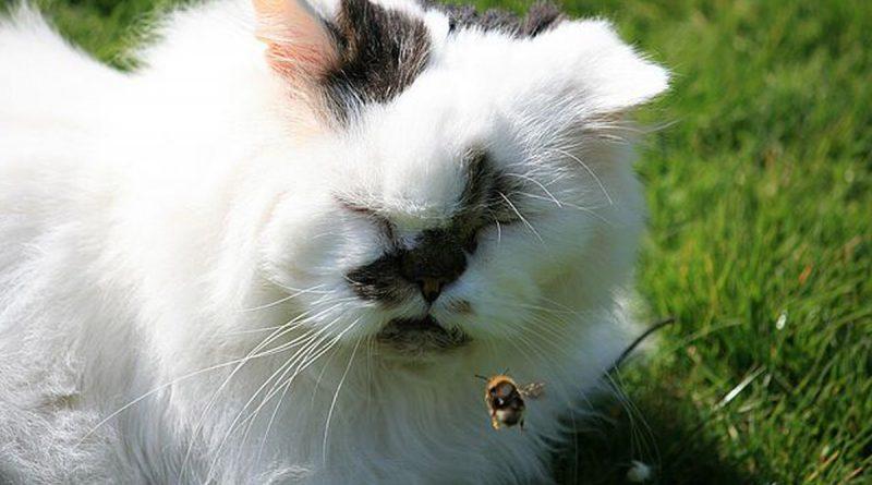 Katze mit Insekt