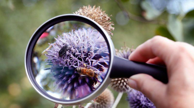 Insekten zählen