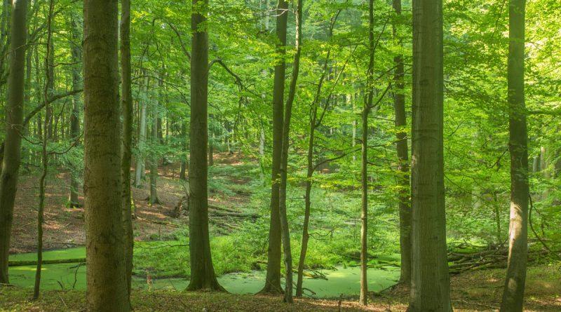 Waldmoor